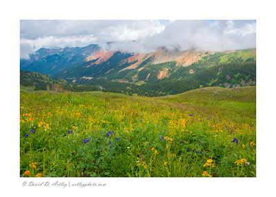 Wildflowers, Minearal Basin, near Silverton, CO
