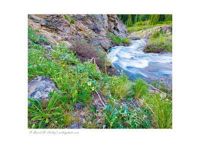 Wildflowers along Lake Fork Gunnison River near Lake City, CO