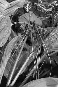 Garfield Plant