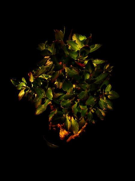 Nite plant ... view @O