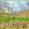 Spring floweretts