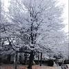 Snow in Autumn
