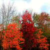 Shokan fall foliage 10-15-2011