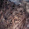 Sequoia Waves
