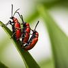 Bugs Life II