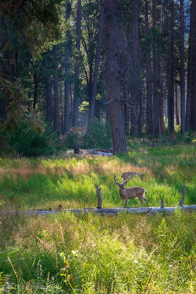 Breakfast in Yosemite