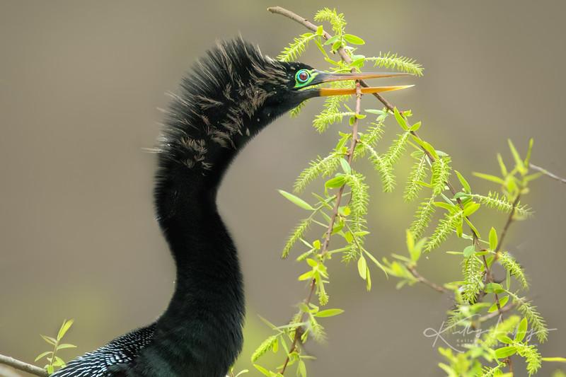 Nesting Greens