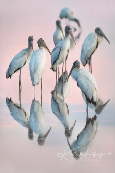 Party of Storks