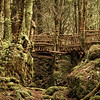 A Rickety Old Bridge in the Forest