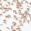 Cloudy with a Chance of Red Knots