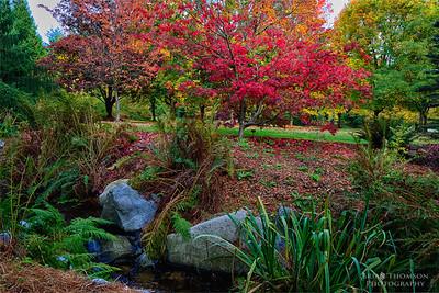 Van Deusen Gardens Fall Colour Oct 2012