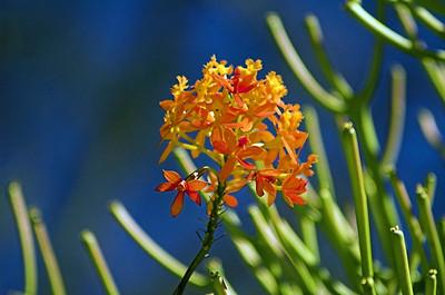 Flora Pearl Beach - NSW Australia - 9 Oct 2005