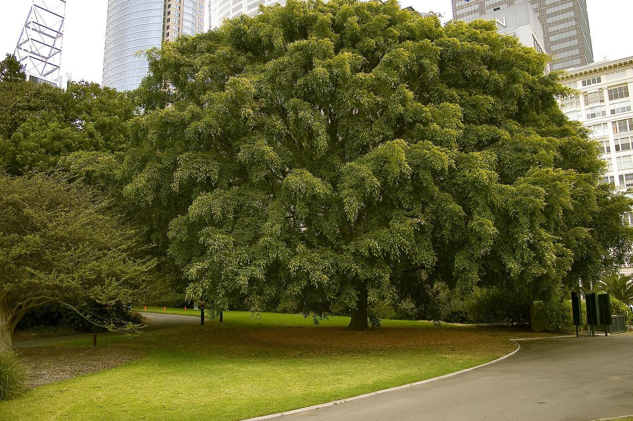 Royal Botanical Gardens Sydney -NSW Australia - 4 Oct 2005