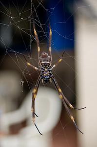 Spider Brooklyn, NSW Australia - 21 Jun 2006