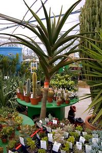 Cacti Kings Plant Barn Auckland New Zealand - 19 Aug 2006