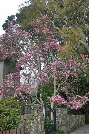 Magnolia Mountain Road Auckland New Zealand - 2 Sep 2006