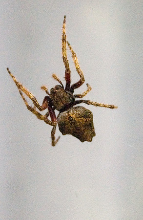 Spider Moana Ave Auckland New Zealand