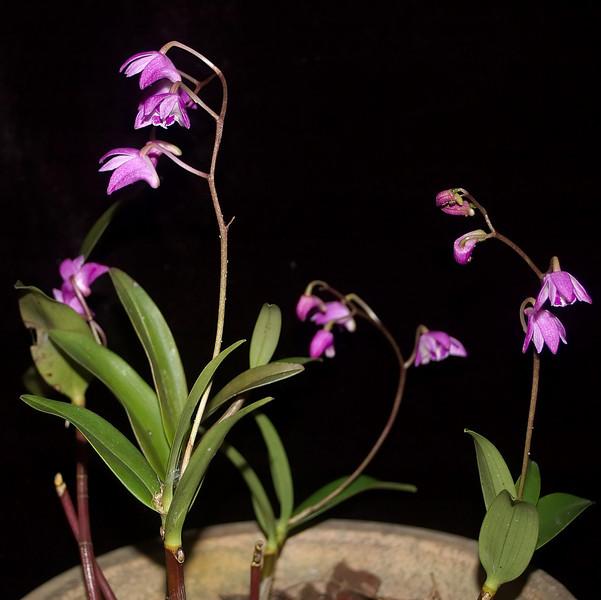 Orchid Moana Ave Onehunga Auckland New Zealand - 29 Aug 2006