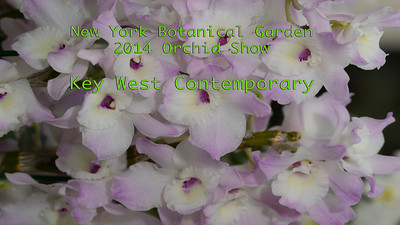 2014 Orchid Show NYBG