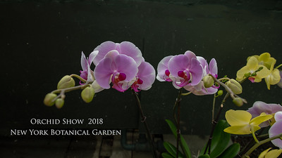 2018 Orchid Show