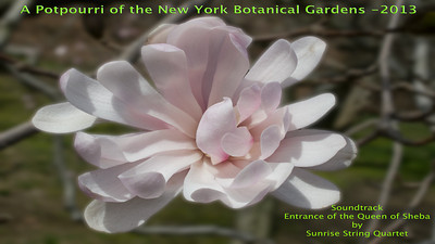 A Potpourri of NYBG 2013