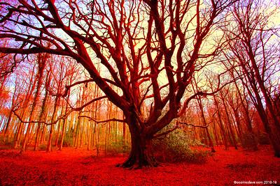 Autumn Tree in Wigpool Woods 001
