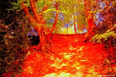 Offa's Dyke Path, Tintern 001