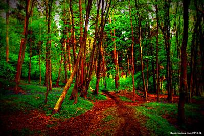 Parkend Woods 001