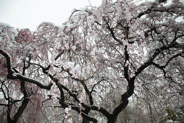 BT Baumblüte Nr. 42-22755398