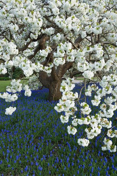 BT Baumblüte Nr. 42-24003167