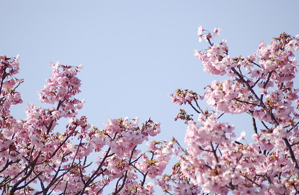 BT Baumblüte Nr. 42-25465661