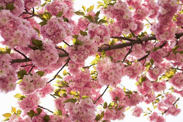 BT Baumblüte Nr. 600-03017065