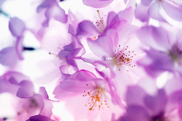 BT Baumblüte Nr. 42-25334471