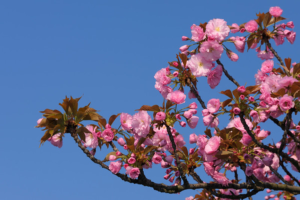 BT Baumblüte Nr. 600-03361620