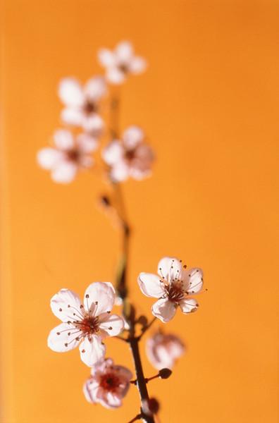 BT Baumblüte Nr. 42-15268273