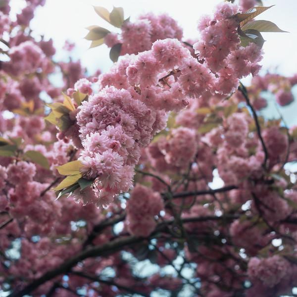BT Baumblüte Nr. 42-21287013