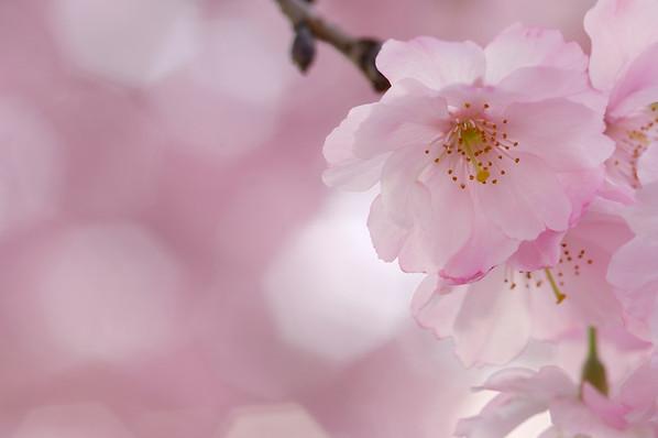 BT Baumblüte Nr. 42-25766929
