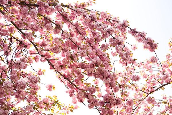 BT Baumblüte Nr. 600-03017070