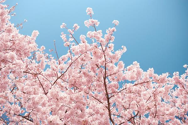 BT Baumblüte Nr. 42-25687187