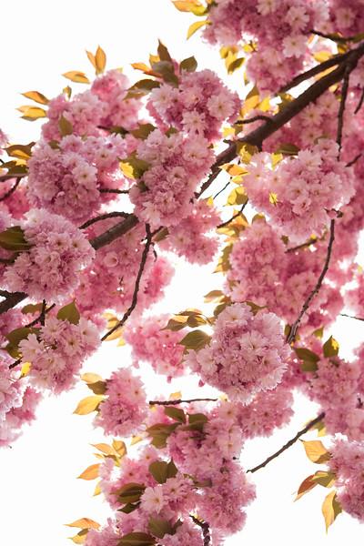 BT Baumblüte Nr. 600-03017066