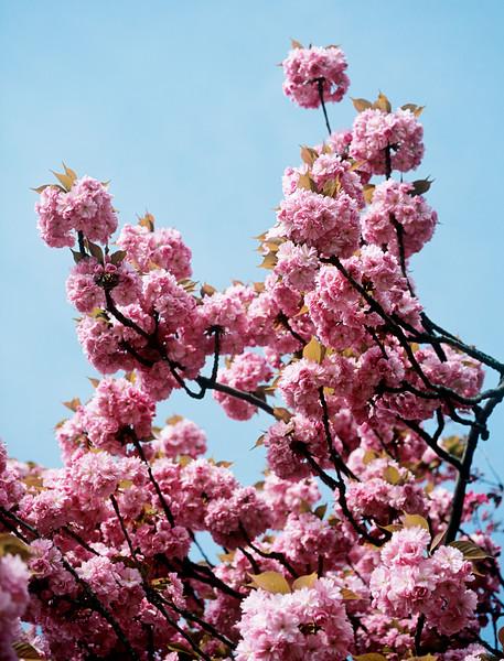BT Baumblüte Nr. 42-23715604