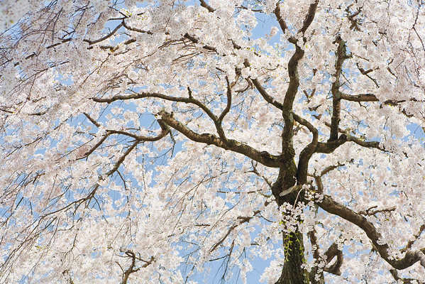 BT Baumblüte Nr. 42-20894956