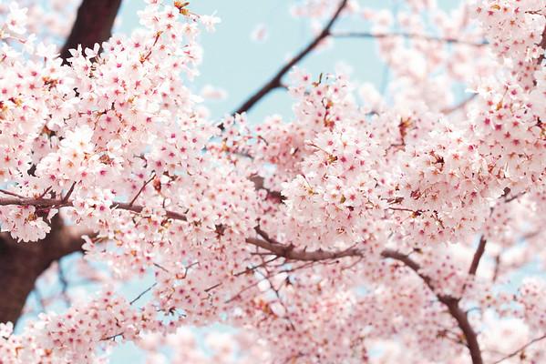 BT Baumblüte Nr. 42-25687177