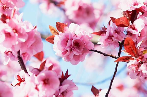 BT Baumblüte Nr. 42-20204513