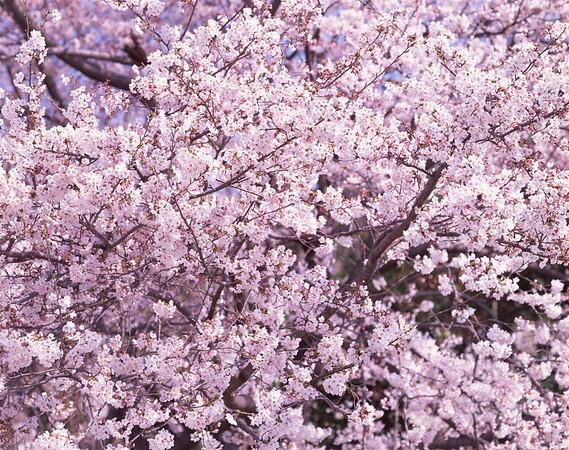 BT Baumblüte Nr. 42-26088262