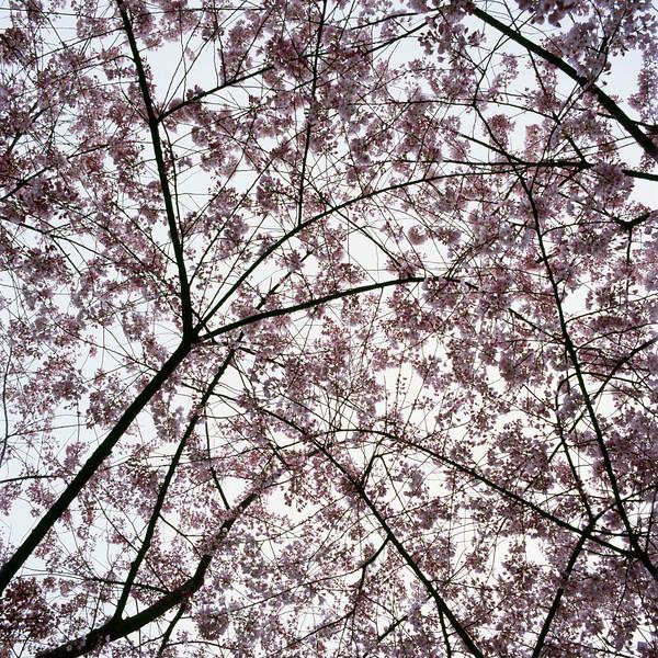 BT Baumblüte Nr. 42-21604990