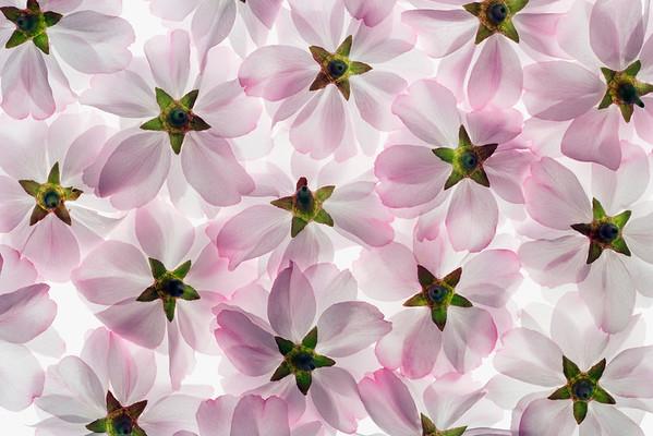 BT Baumblüte Nr. 42-17315220