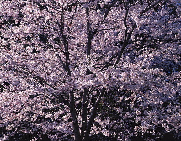 BT Baumblüte Nr. 42-25569731