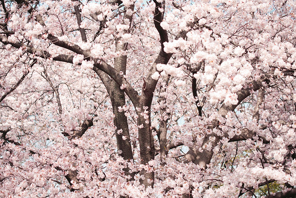 BT Baumblüte Nr. 42-25687176