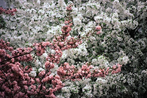 BT Baumblüte Nr. 42-19657934